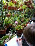 Botanical Garden Leiden